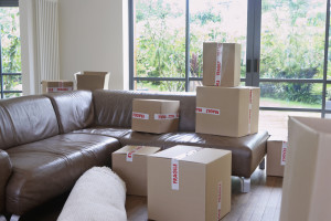 professional movers
